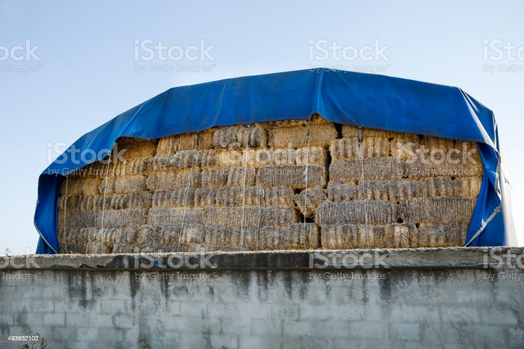 Hay Bales with blue tarpaulin stock photo