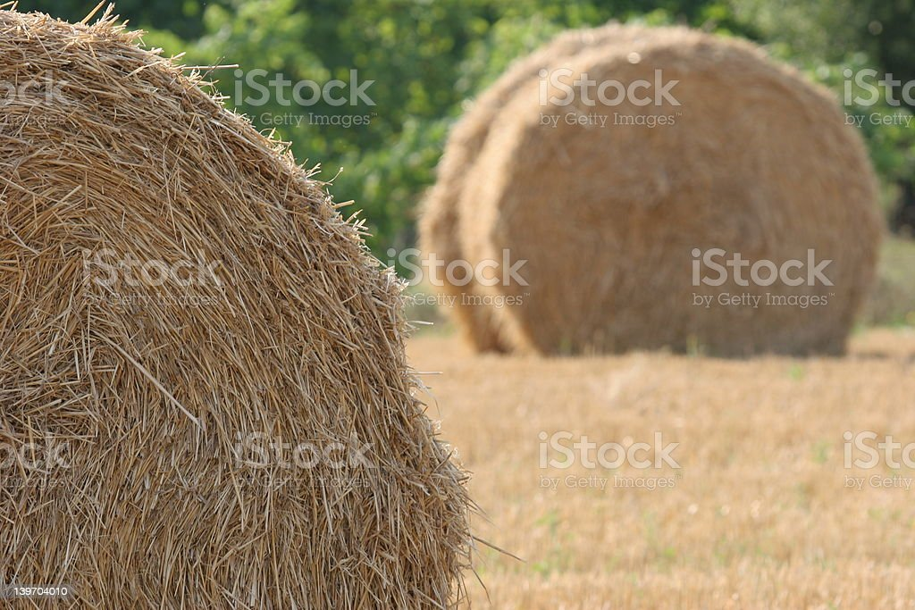 Hay balls royalty-free stock photo