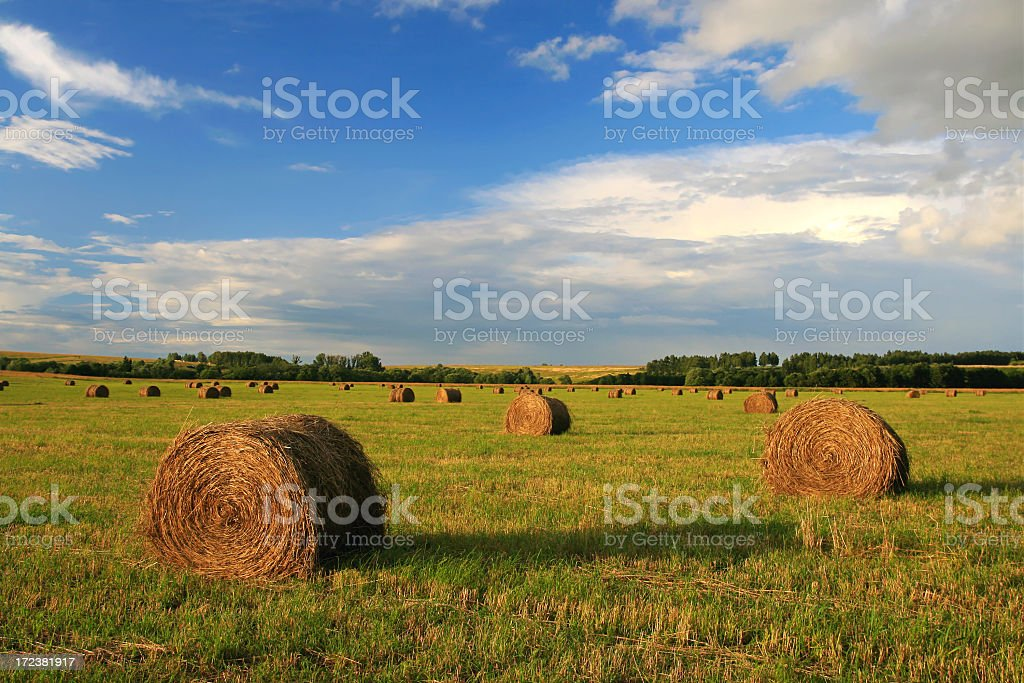 Hay barrels in a green grass field under a blue sky royalty-free stock photo