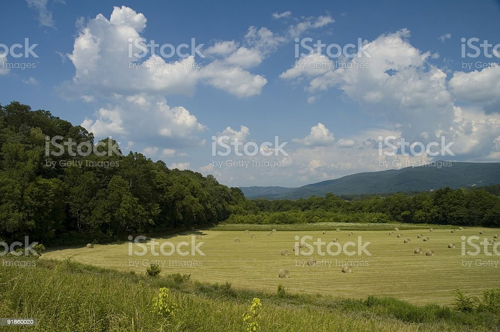 Hay Field, Early Summer Landscape, East Tennessee stock photo