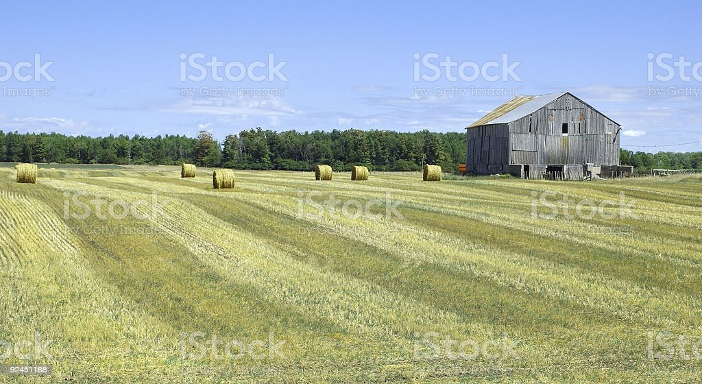 Hay Field Harvest royalty-free stock photo