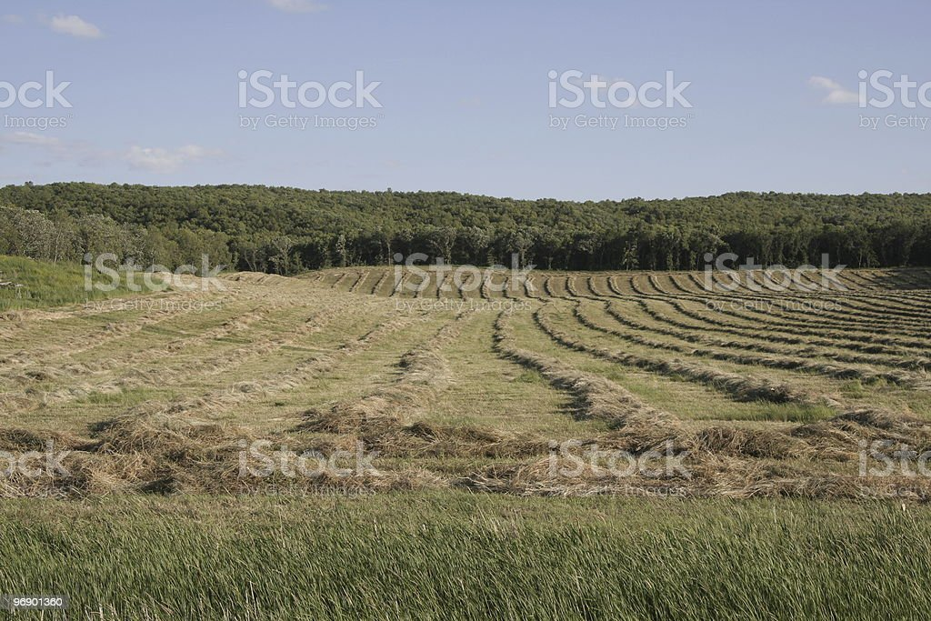 Hay Field royalty-free stock photo