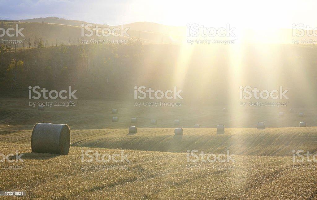 Hay Field with Sun Beams royalty-free stock photo