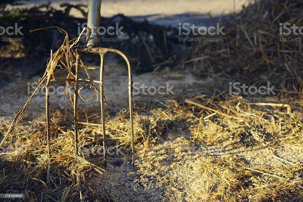 Hay Fork and Manure in Evening Sun royalty-free stock photo