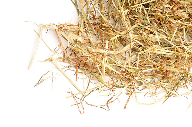 Hay from above Hay  spread over a white ackground. hay stock pictures, royalty-free photos & images