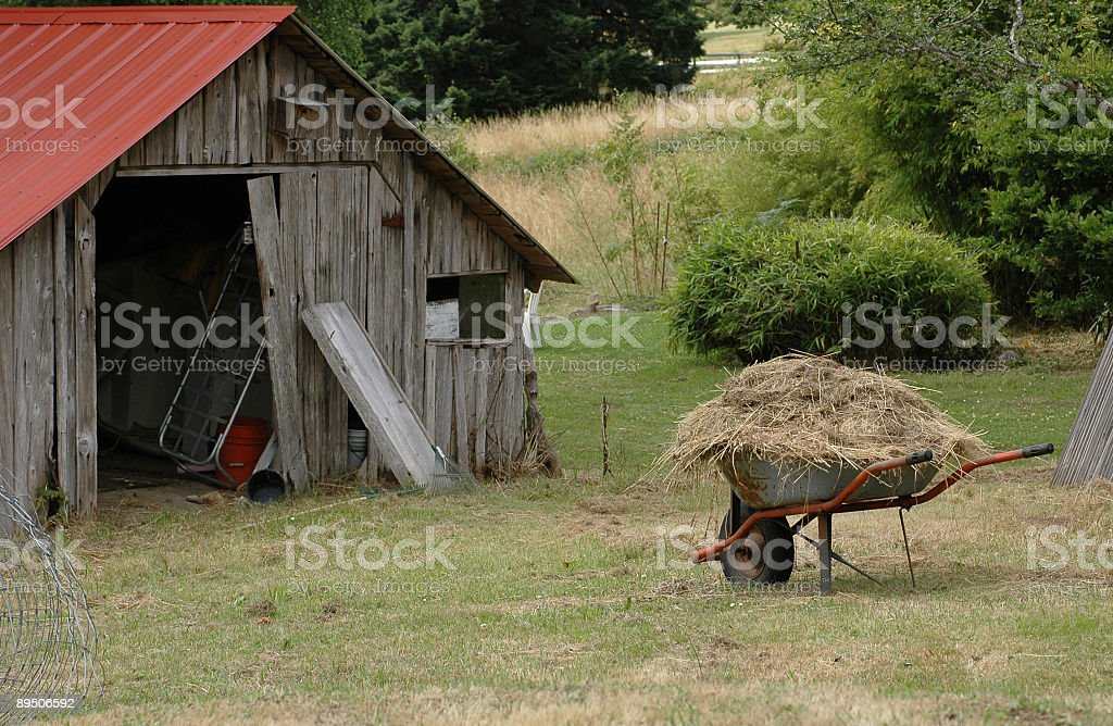 Hay going to the Barn royalty-free stock photo