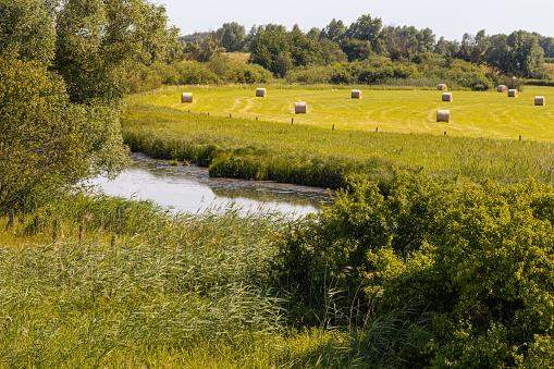 Hay harvest in UNESCO biosphere reserve river landscape Elbe, Boizenburg.