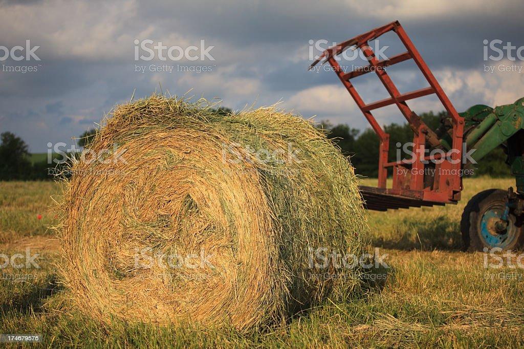 hay harvest royalty-free stock photo