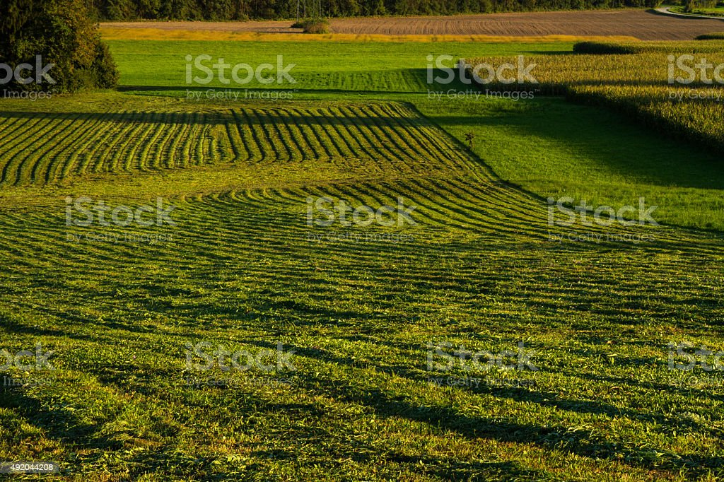 Hay harvesting in autumn stock photo