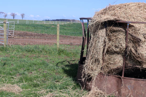 Hay in a field stock photo