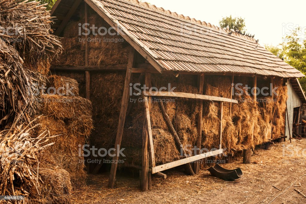 hay in the barn stock photo