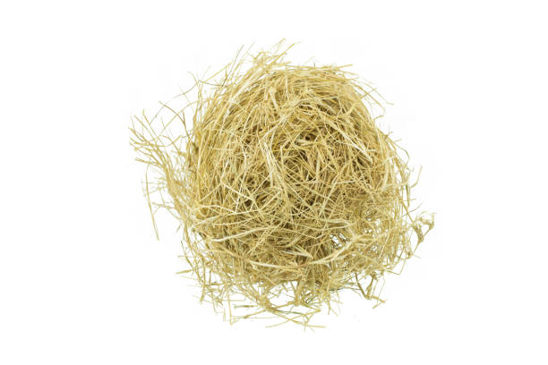 hay isolated on a white background hay isolated on a white background hay stock pictures, royalty-free photos & images