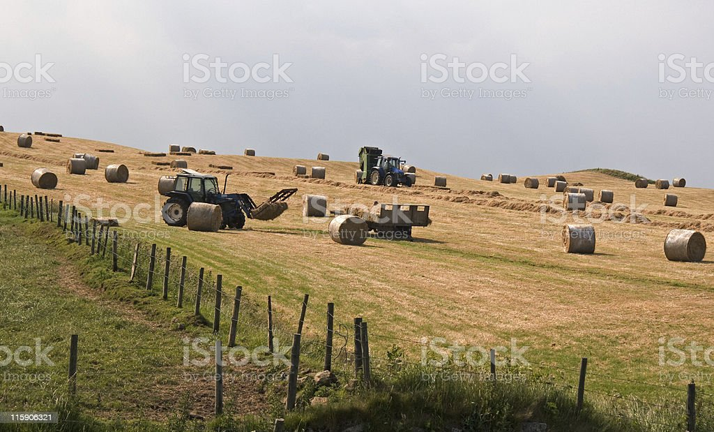 Hay making stock photo