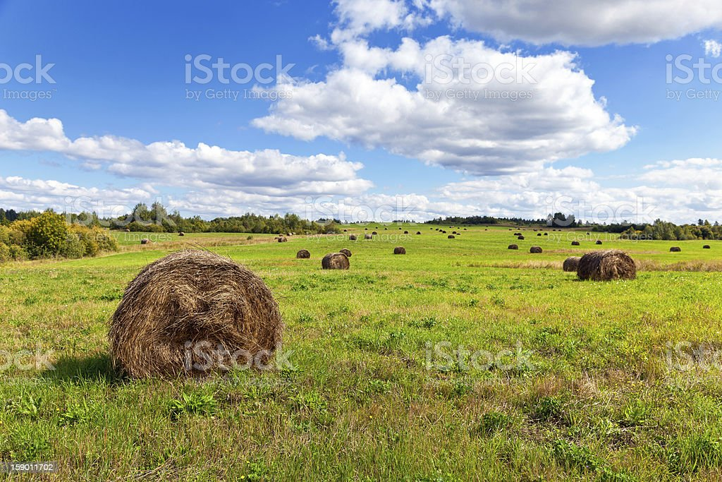 Hay on field under blue sky in summer day royalty-free stock photo