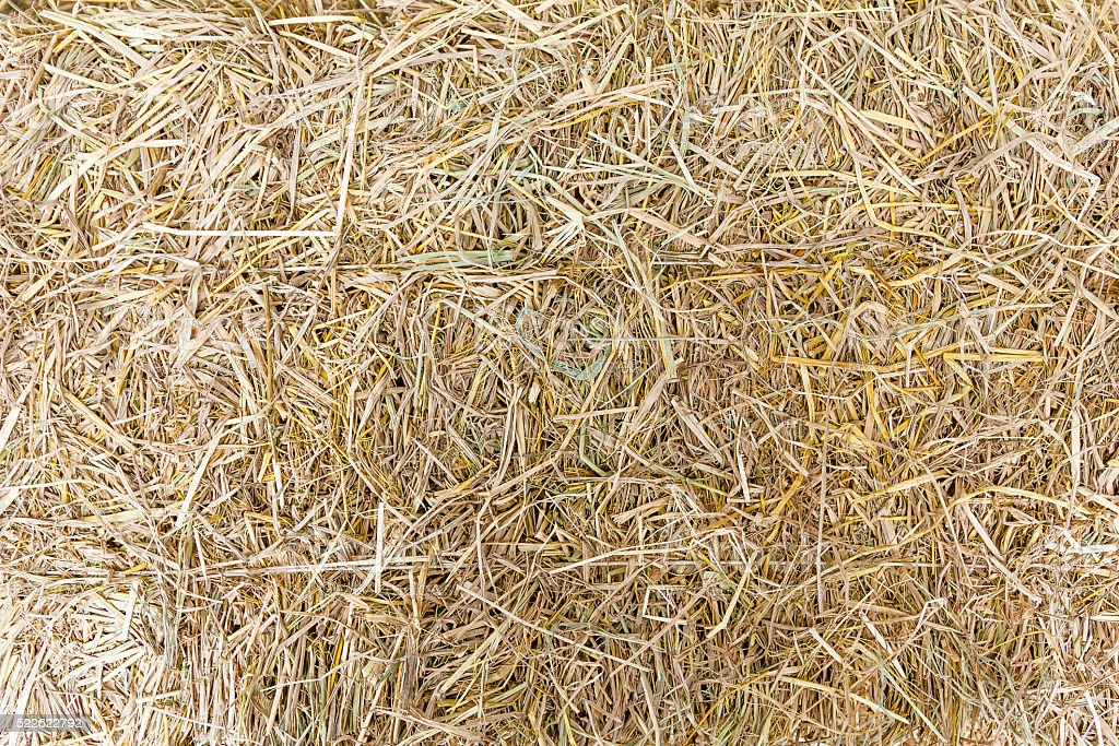 Hay on ground. stock photo