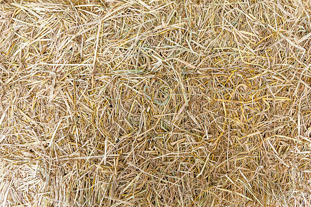 Hay on ground. Texture of hay on ground. hay stock pictures, royalty-free photos & images