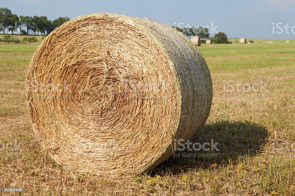 Hay Roll On Farm stock photo