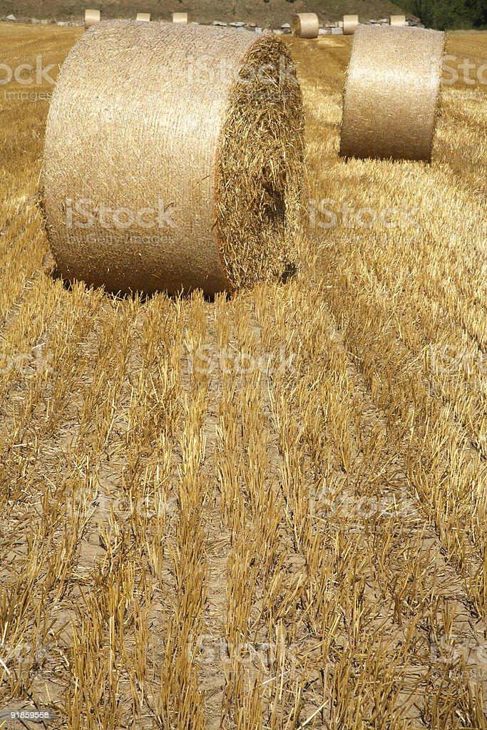 Hay Rolls on a Farm stock photo