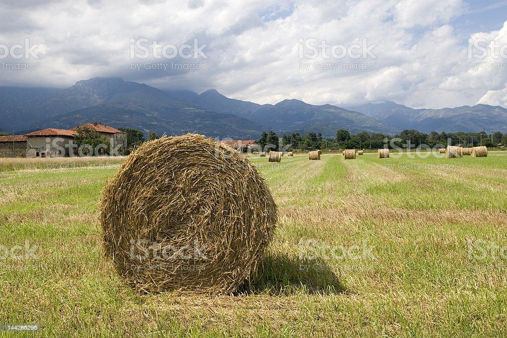Hay rolls royalty-free stock photo
