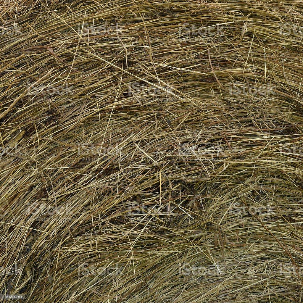 Hay Roundbale Texture stock photo