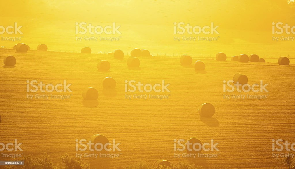 Hay rounds rest lazily in a golden field stock photo