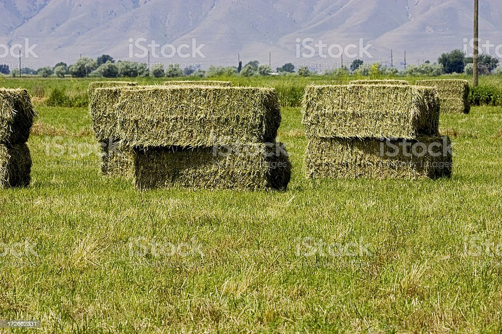 Hay, Stacked Large Bales. stock photo