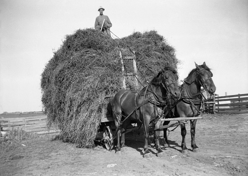 Farmer driving draft horse team from top of hay wagon. Note metal wheels on hay wagon. Wellman, Iowa. 1941. Vignette in original film. Scanned film with significant grain.