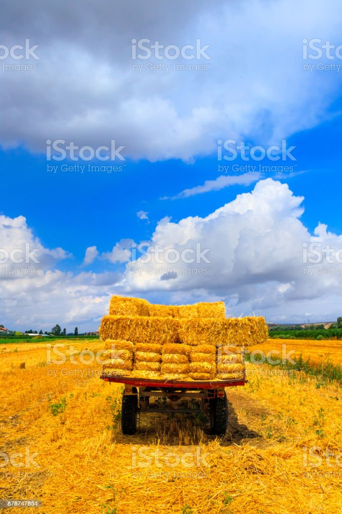 Hay wagon with hay bales on wheat field stock photo
