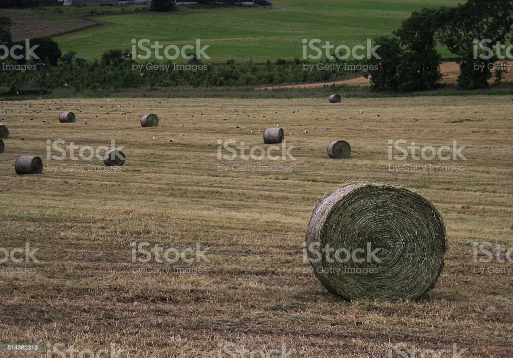 Haybales in the North stock photo