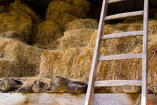 Haybarn stock photo