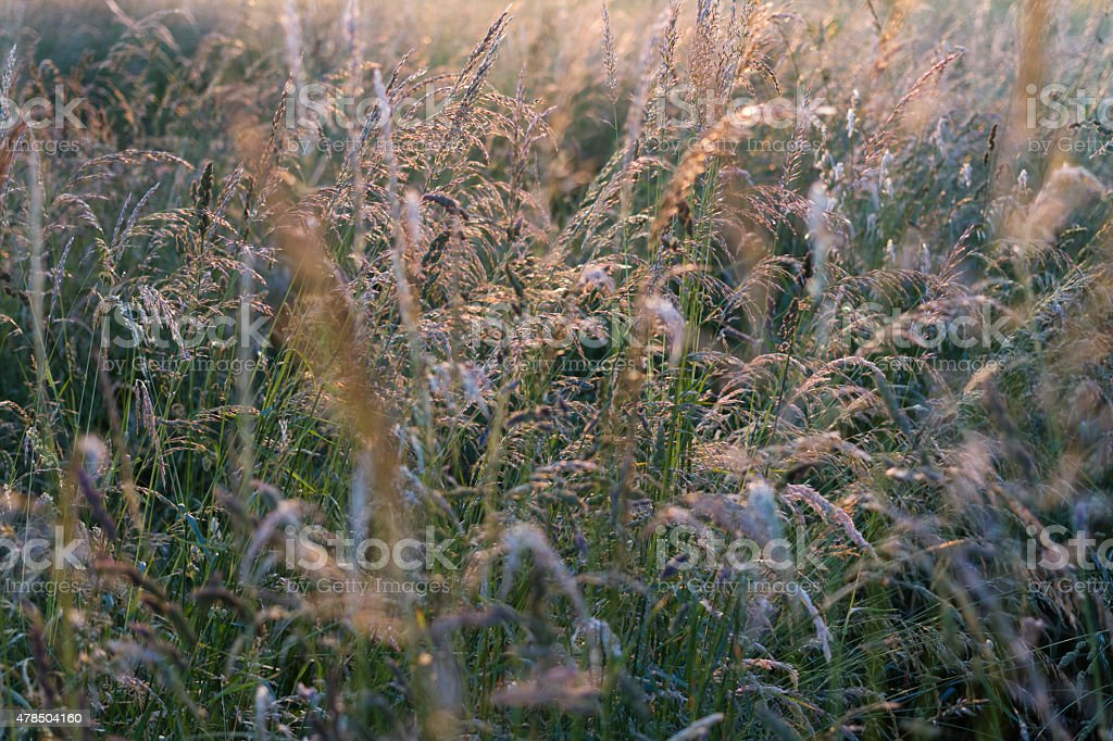 Hayfield in Summer stock photo