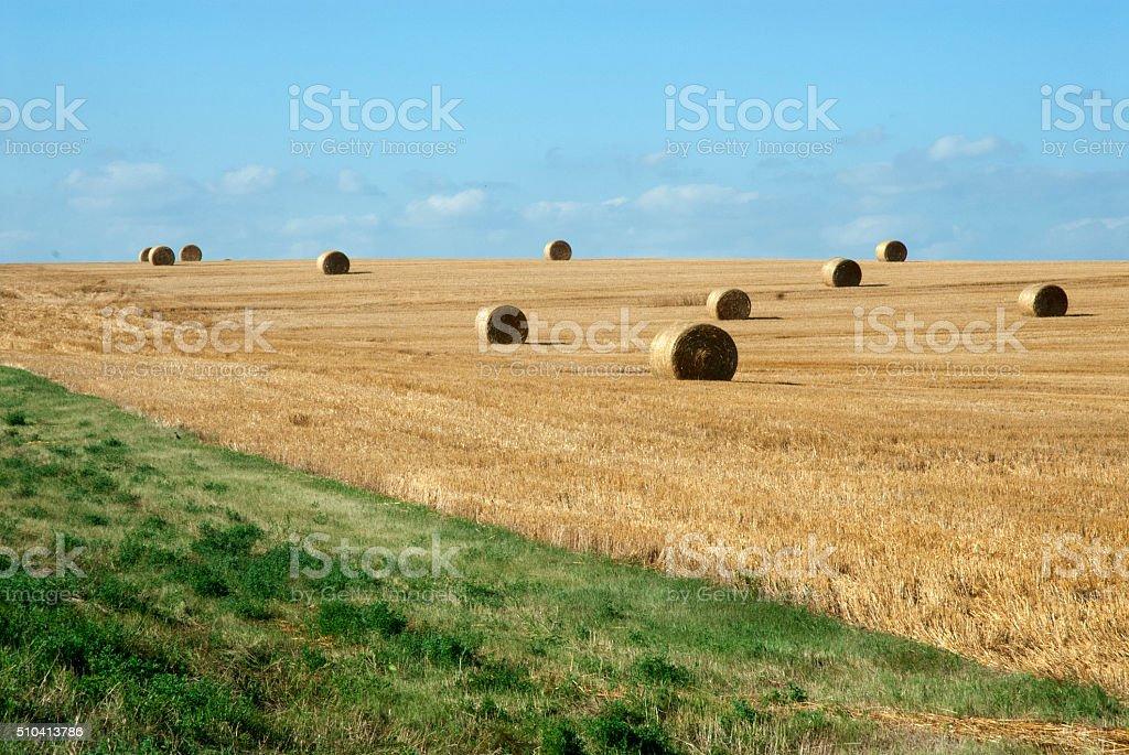 Hayfield stock photo