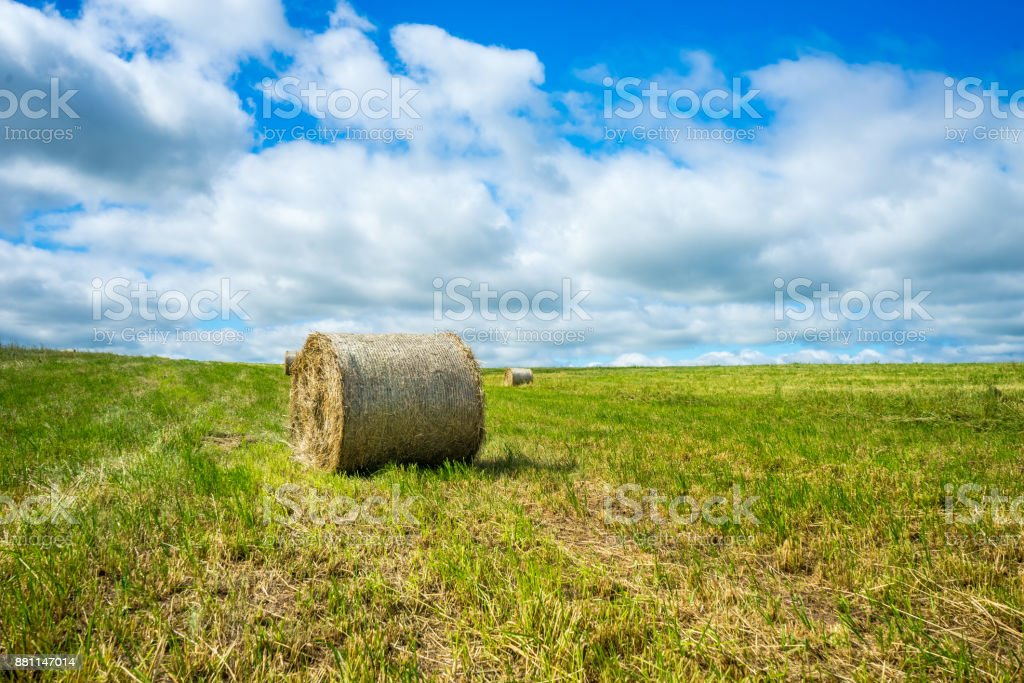Haylage in a package on a mown field stock photo