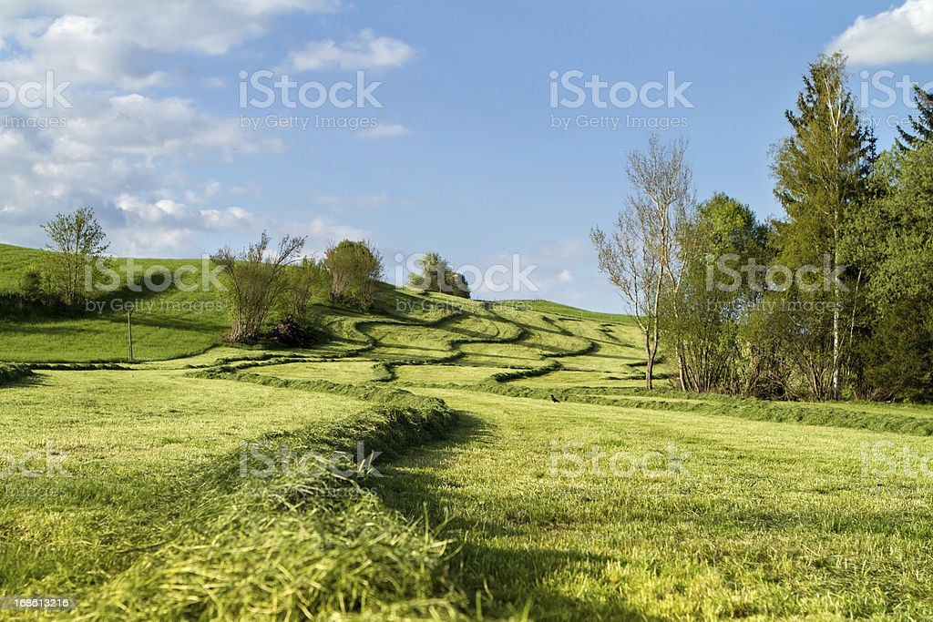 haymaking in Bavaria royalty-free stock photo