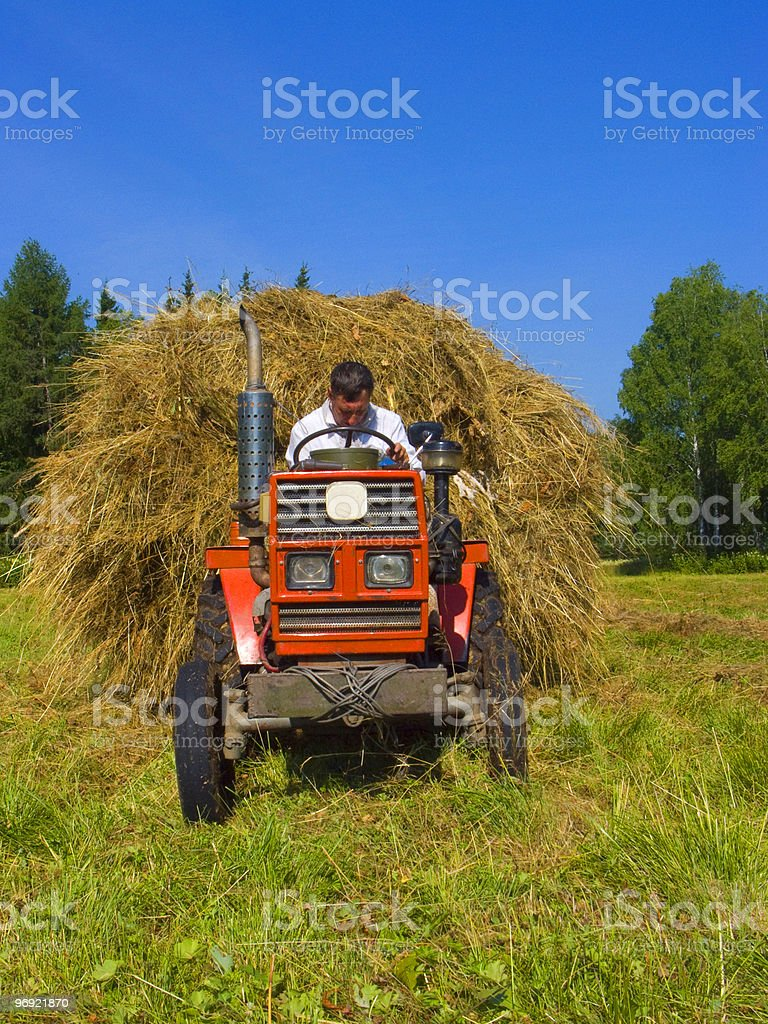 Haymaking in Siberia royalty-free stock photo