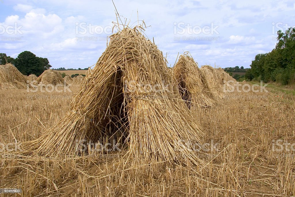 Haymaking stock photo