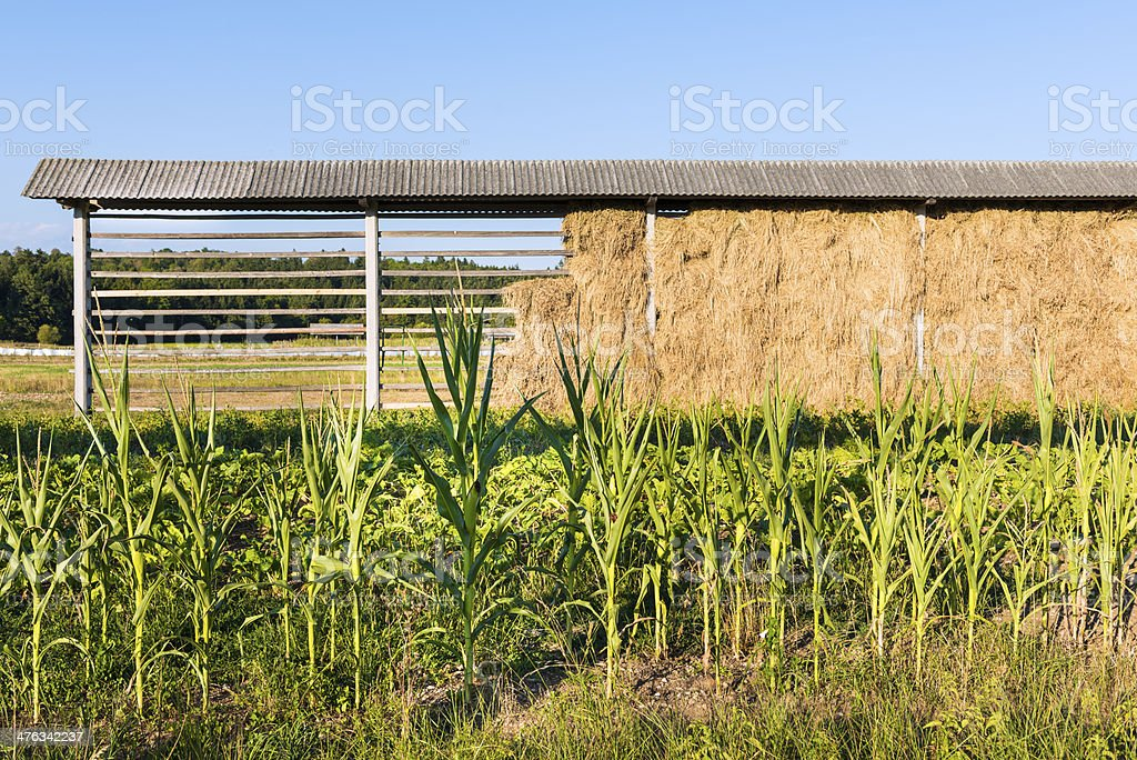 Hayrack royalty-free stock photo