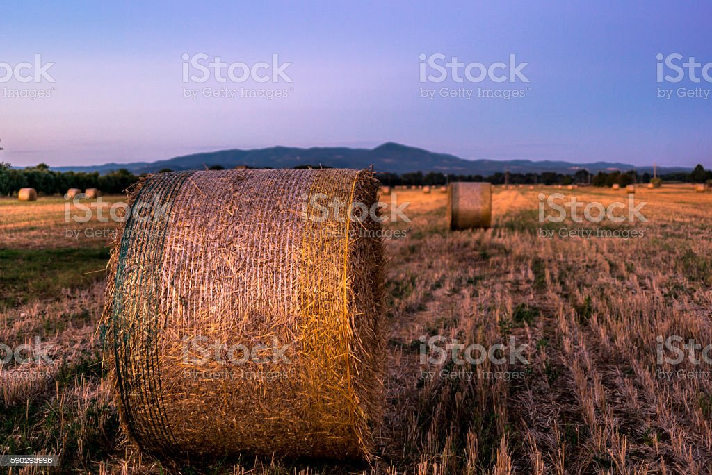 Hayrolls in Tuscany at the sunset royaltyfri bildbanksbilder