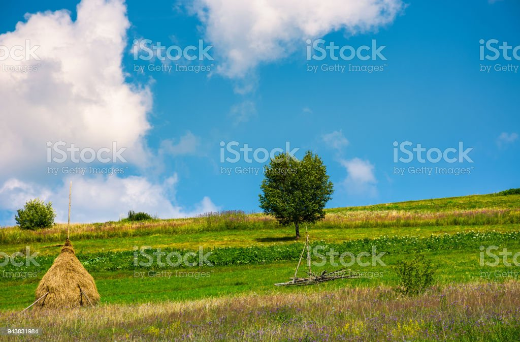 haystack and a tree on the grassy field stock photo