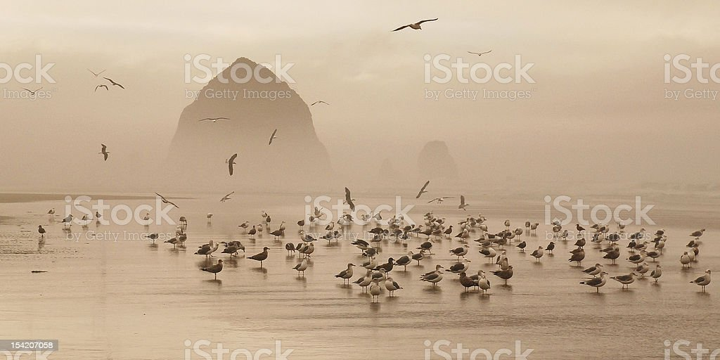 Haystack and Gulls stock photo