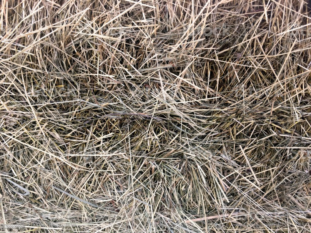 Haystack close-up, texture, abstract background stock photo