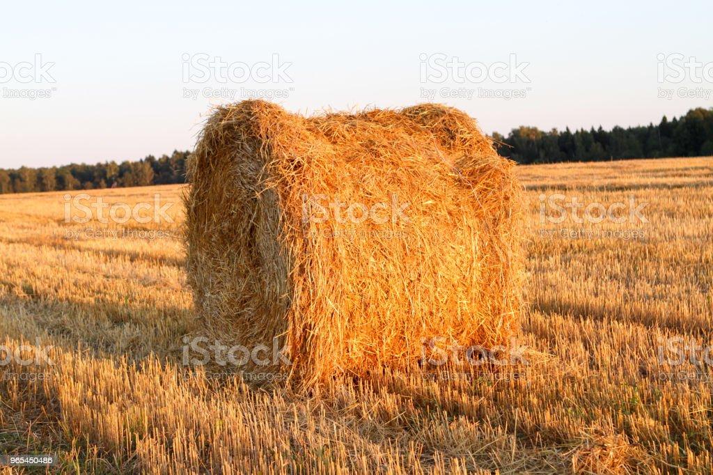 Haystack harvest field landscape. - Zbiór zdjęć royalty-free (Bez ludzi)