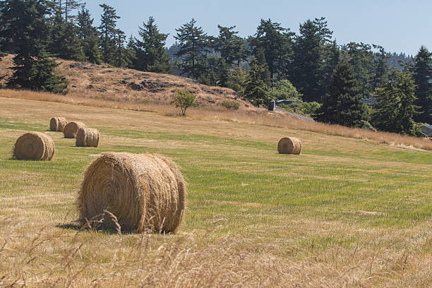 Haystack in field stock photo