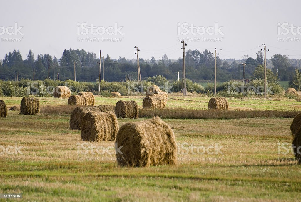 haystack in the Belarus royalty-free stock photo