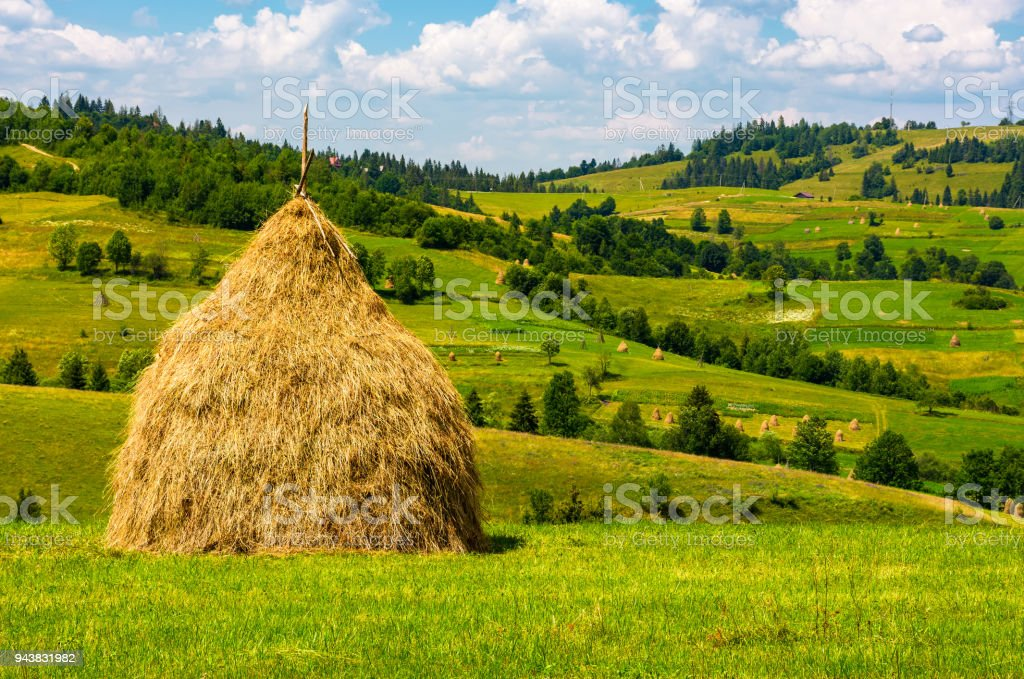 haystack on the grassy field stock photo