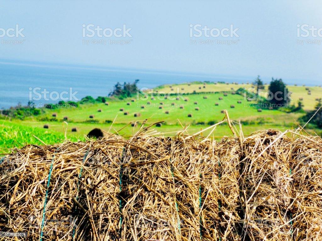 Haystacks by the sea stock photo
