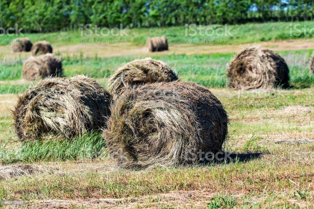 Haystacks on field in countryside zbiór zdjęć royalty-free