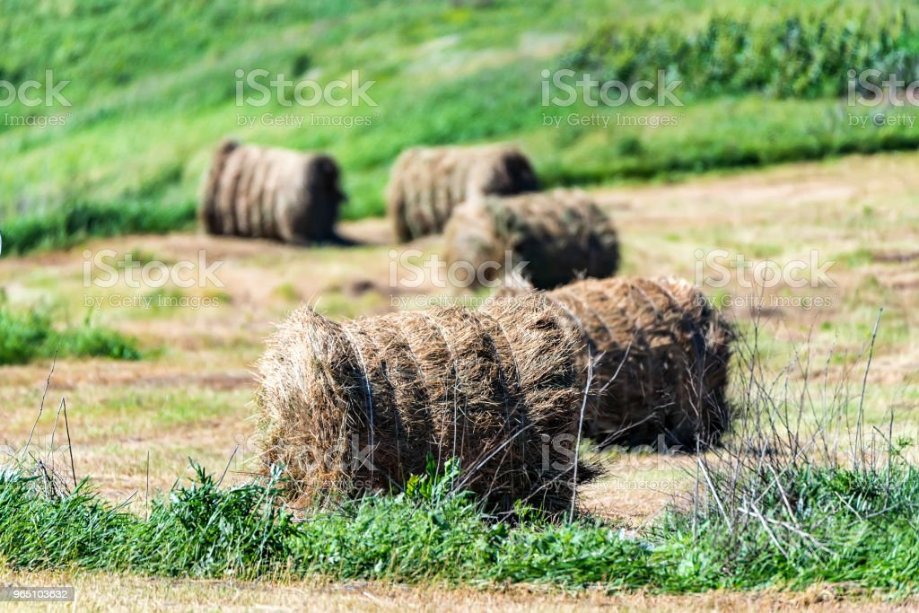 Haystacks on field in countryside zbiór zdjęć royalty-free