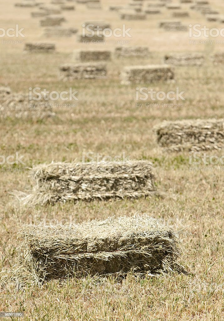 Haystacks on open field royalty-free stock photo