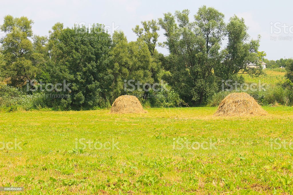 Haystacks on the meadow royalty-free stock photo